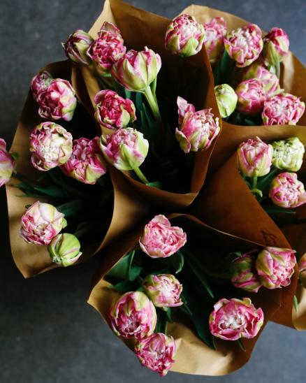 Růžovo-zelené plnokvěté tulipány z lokální farmy (7ks ve svazku)