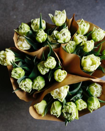 Bílo-zelené plnokvěté tulipány z lokální farmy (7ks ve svazku)