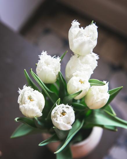 Jednoduché tulipány z Čech od Loukykvět (7ks)