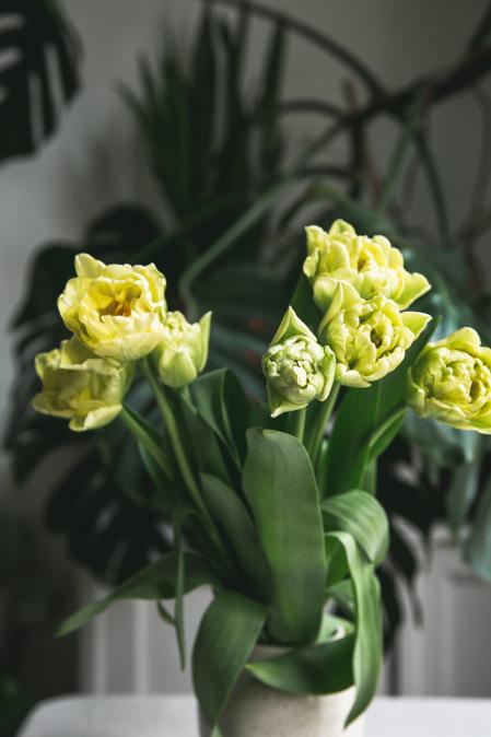 Plnokvěté tulipány z Čech od Loukykvět